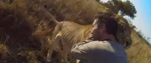 This is the cutest video I have seen all year. Sweet lion hug in the wild.